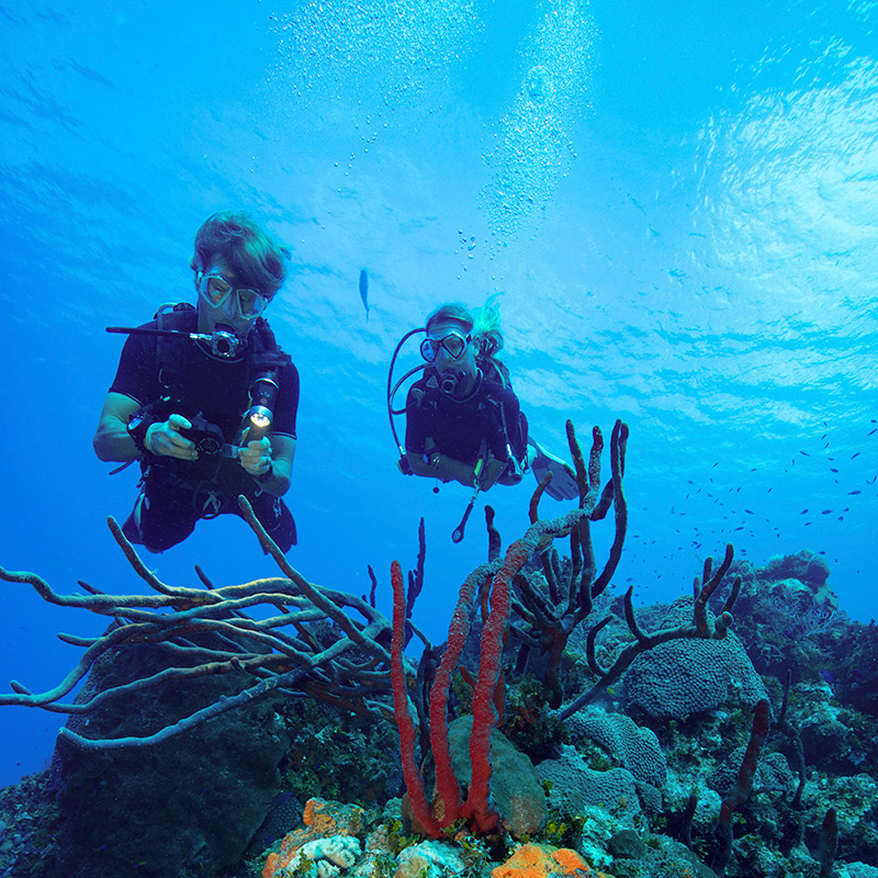 Bautizo de buceo Gran Canaria