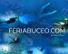 Feria de Buceo con Brave Divers