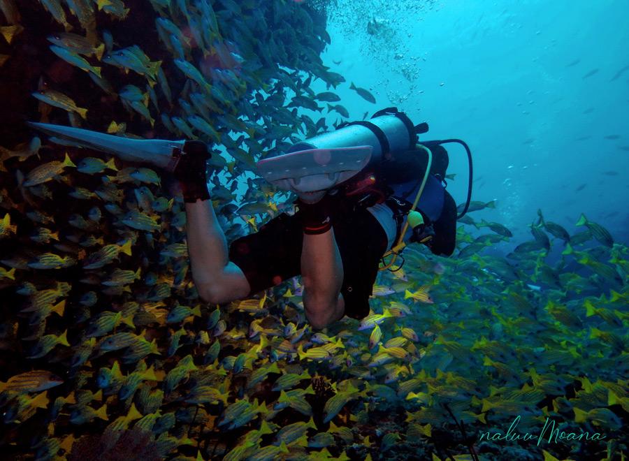 Experiencia de buceo en Maldivas