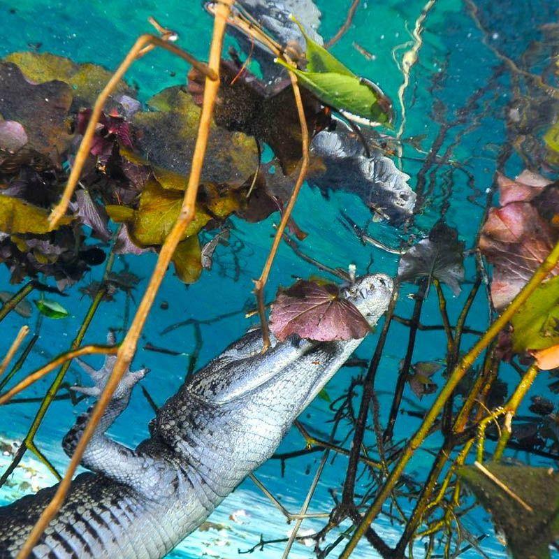cenote carwash mexico