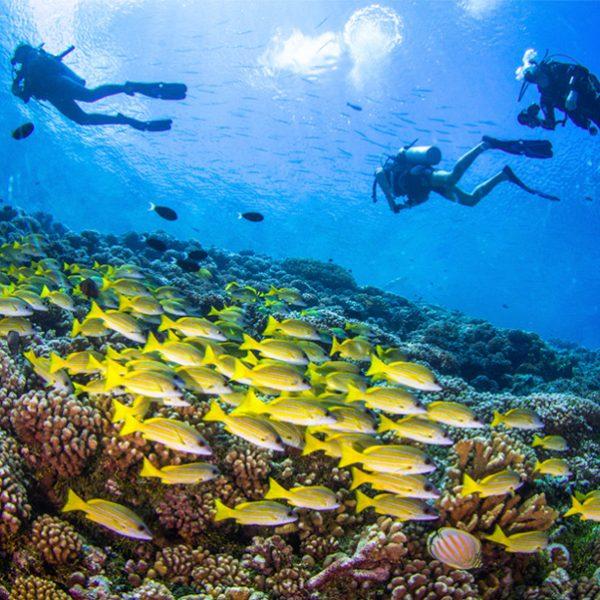 Curso Open Water en Menorca