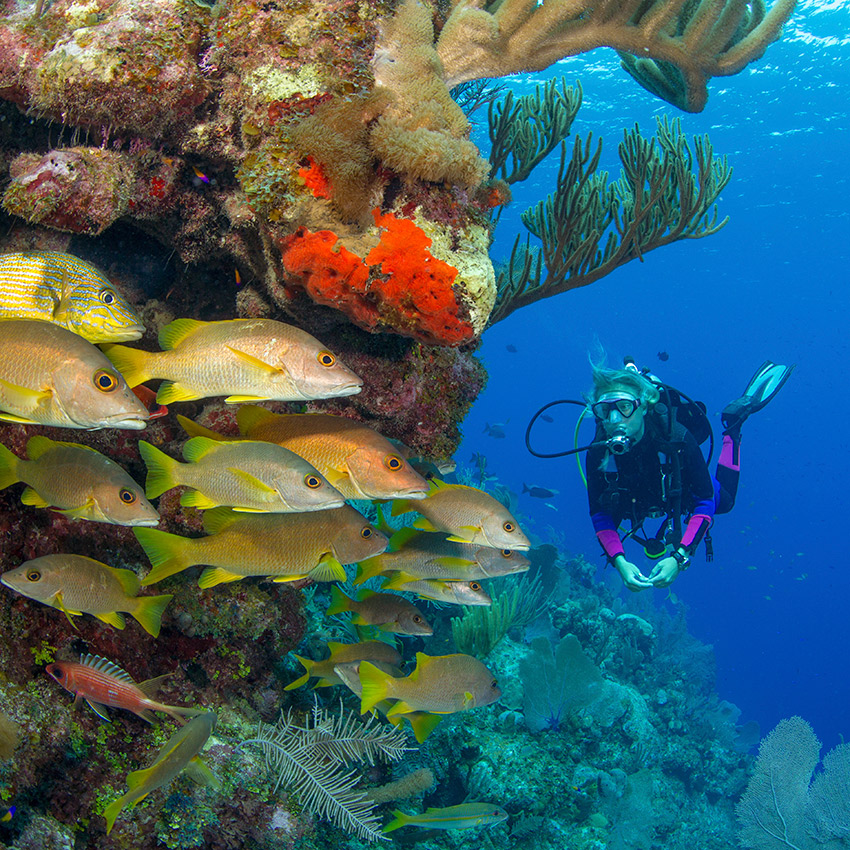 Discover Scuba Diving en Cádiz