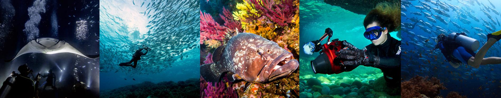 Galería de fotos y vídeos BRAVE Divers