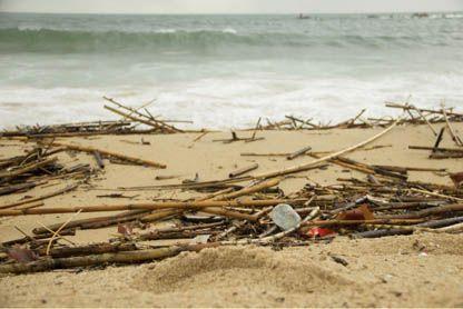 Limpieza de playas con Sanamares