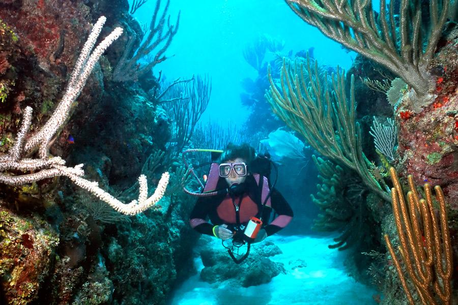 paquete-inmersiones-en-riviera-maya