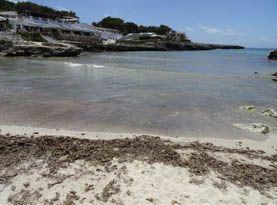 Posidonia oceanica en playas