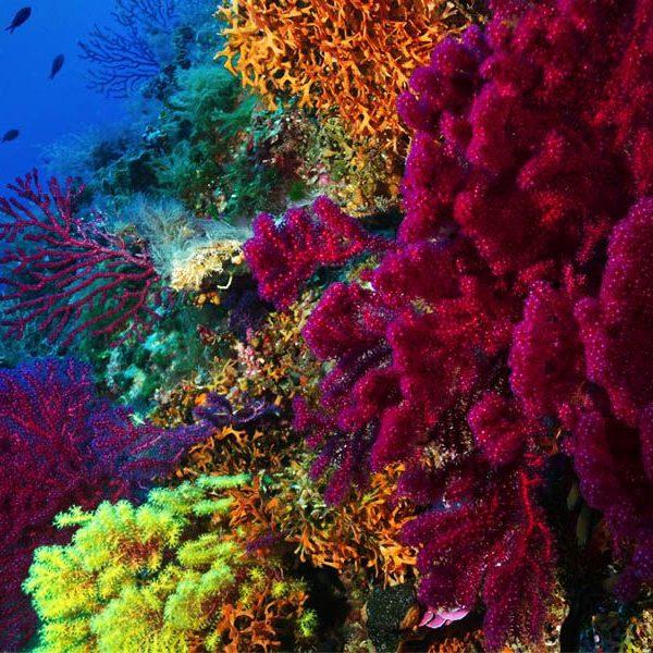 Quiz sobre el Coral
