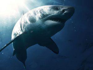 test sobre el tiburon blanco